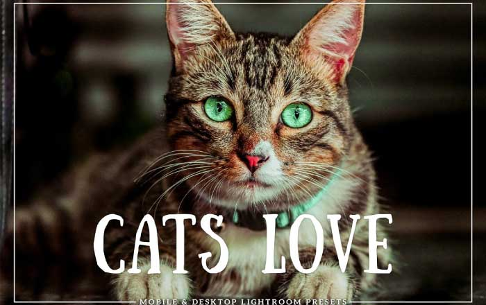Cats Love: Pet Photography Presets