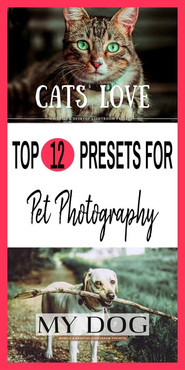 Top 12 Popular Presets for Pet Photography