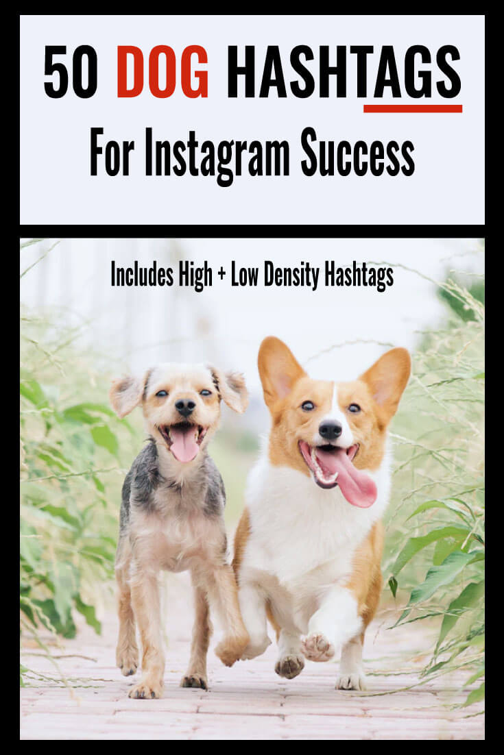 50 Dog Hashtags for Instagram Success