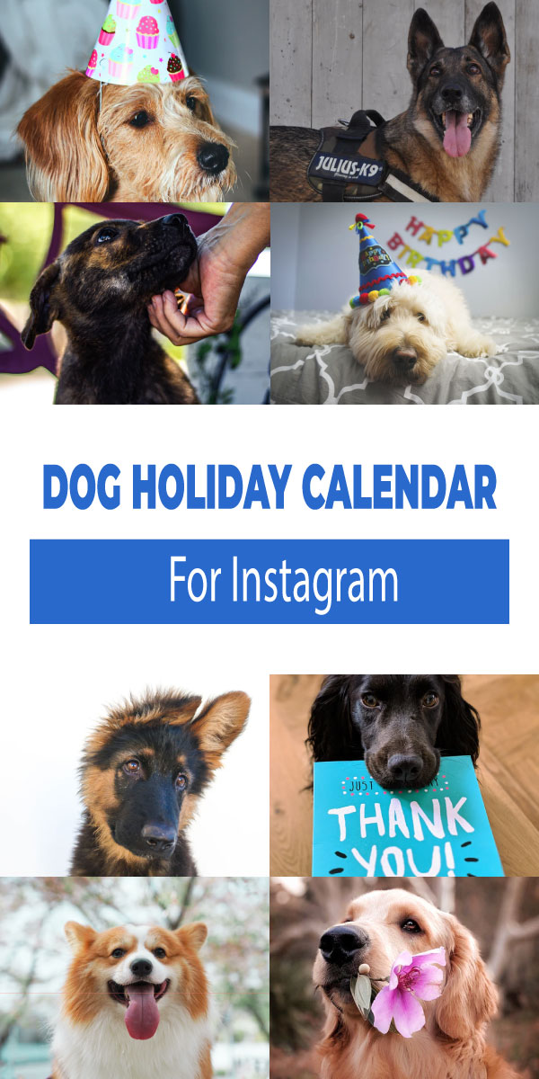 Dog Holiday Calendar For Instagram